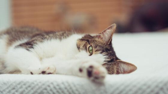 Il gatto e i suoi aspetti comportamentali!