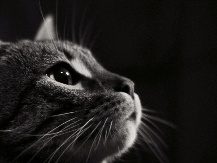Come conquistare un gatto in 5 mosse…