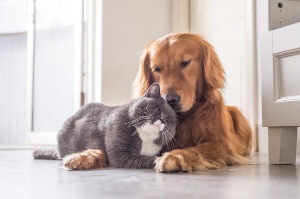 Vaccini per cani e gatti: ogni quanto farli?