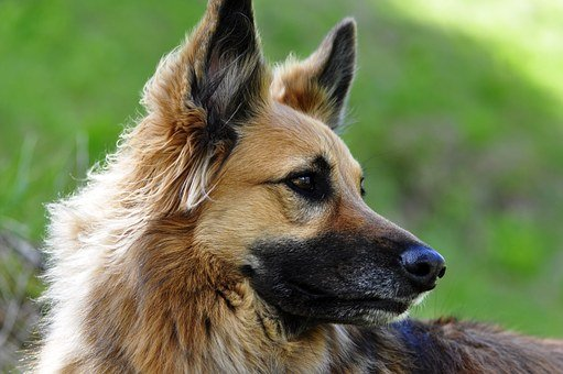 L'obiettivo: cani allerta-Covid anche all'ingresso delle scuole…