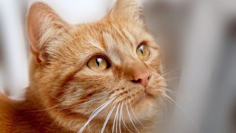 Gatto depresso? Ecco i sintomi (e i rimedi)…