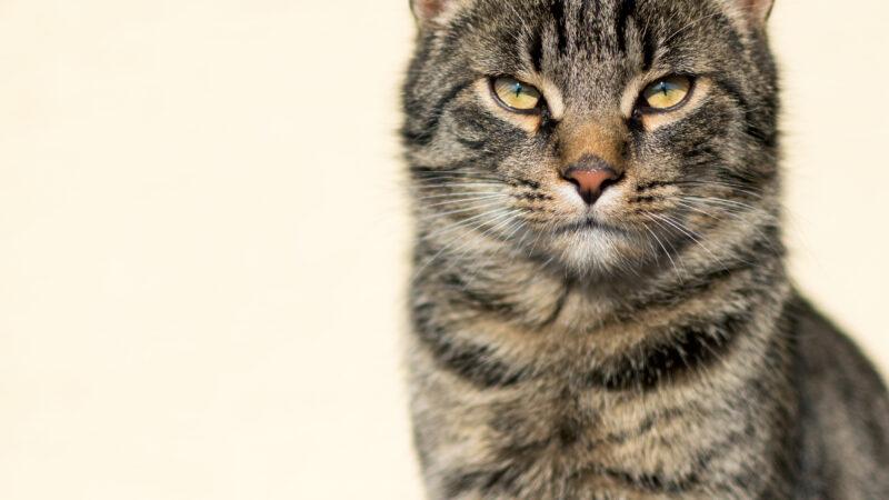 Gatto annoiato? Ecco i sintomi (video)