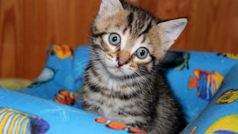 Gatti: meno rischi se vi si convive dalla nascita!