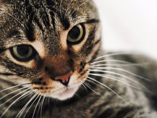 Gatti: le regole per il viaggio con il trasportino…