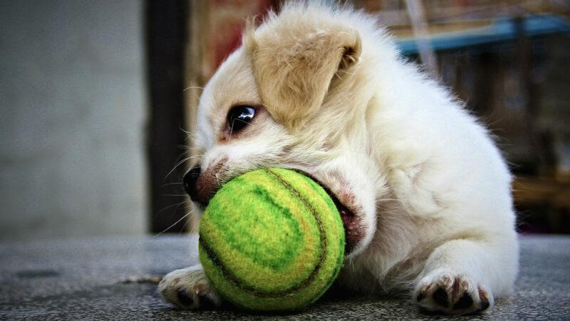 Giocare con il proprio cane…
