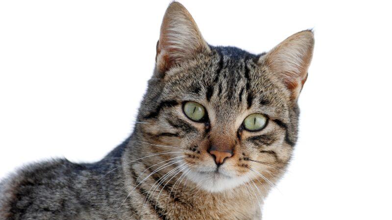Alimentazione del gatto: cosa c'è da sapere…