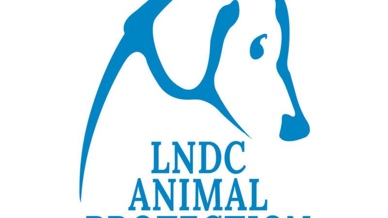 Tobia e la sua storia! Campagna di LNDC…