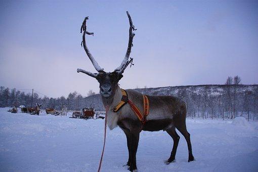 Lapponia: la regione delle favole (e delle renne)!