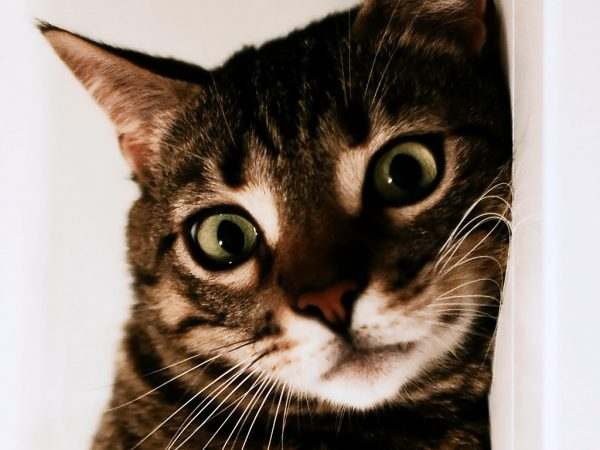 Estate: facciamo giocare il nostro gatto!