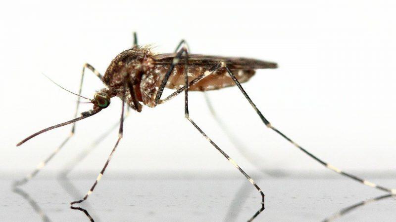 Zanzare: ma è proprio vero che non servono a nulla?
