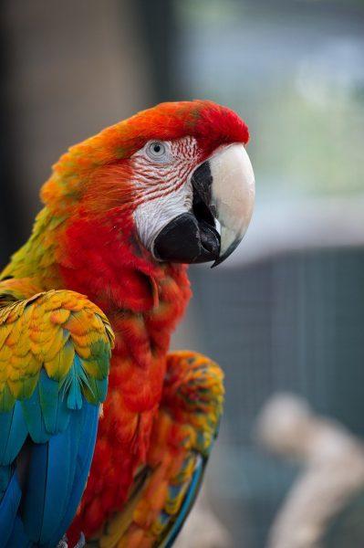 Macao: pappagallo dalla bellezza incredibile!