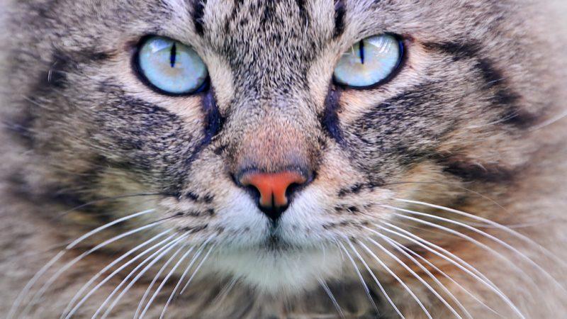 Gatto: il gourmet con i baffi…